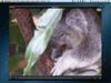 Flip4Mac Player 3.3.8.1 Screenshot 1