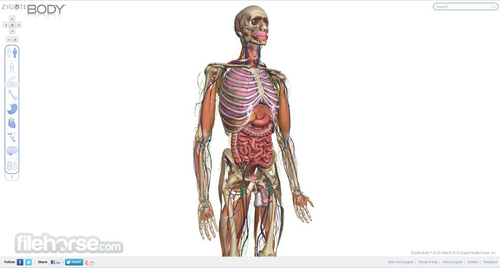 Zygote Body Captura de Pantalla 2
