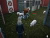 Ranch Simulator Screenshot 3