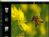 Adobe Photoshop Express 3.0.316 Screenshot 2