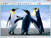 IrfanView 4.50 (32-bit) Captura de Pantalla 1