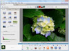 Picasa 3.9 Build 141.303 Screenshot 2