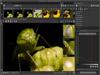 RawTherapee 5.0 (32-bit) Captura de Pantalla 3