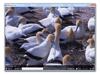 MPV Player 0.32.0 (32-bit) Screenshot 1